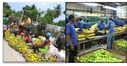 Irony of the Exports: Superiority of the Local Market for Haitian